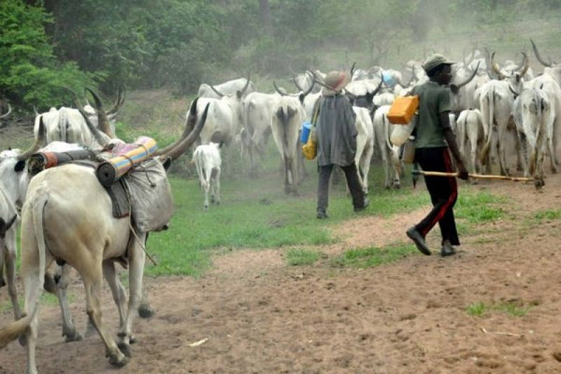 SAMBISA VAST ENOUGH FOR ALL CATTLE IN NIGERIA, CREATE COLONY THERE – PANDEF TELLS FG